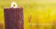 Những tin nhắn chúc buổi sáng hay - SMS chào buổi sáng tốt lành