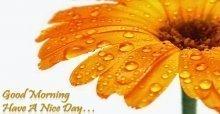 Tin nhắn SMS chúc buổi sáng vui vẻ và hạnh phúc đẹp