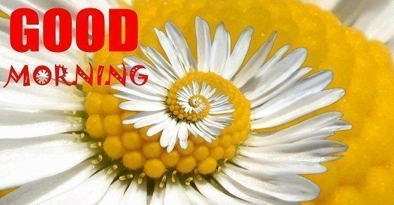 Tin nhắn chúc buổi sáng vui vẻ và hạnh phúc đẹp