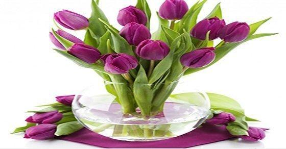 Hướng dẫn cách cắm hoa tulip