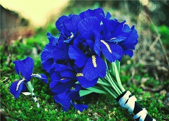 Tặng cho bạn gái loài hoa mà cô ấy thích