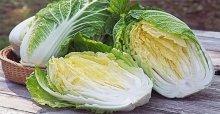 Giải đáp thắc mắc cải bắc thảo là gì và cách làm cải bắc thảo