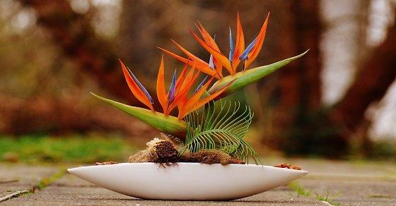 Hướng dẫn cắm hoa thiên điểu cho ngày 20/11