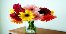 Hướng dẫn cách cắm hoa đồng tiền để bàn đẹp nhất