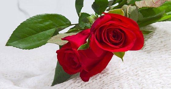 """Hoa hồng là """"nữ hoàng"""" đại diện cho tình yêu"""