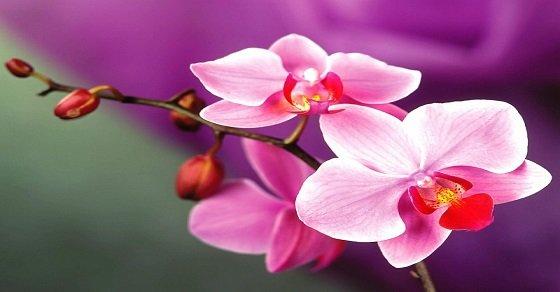 Vẻ đẹp kiều diễm của hoa lan động lòng người