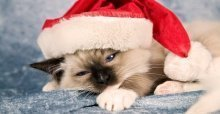 Stt Noel buồn - Những stt buồn về ngày Giáng sinh