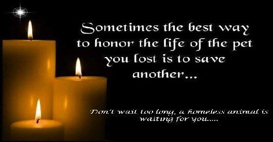 Lời cảm ơn đám tang hay nhất