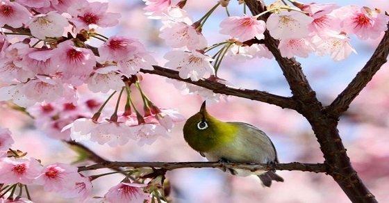 Bài văn hay thuyết minh hoa đào ngày Tết