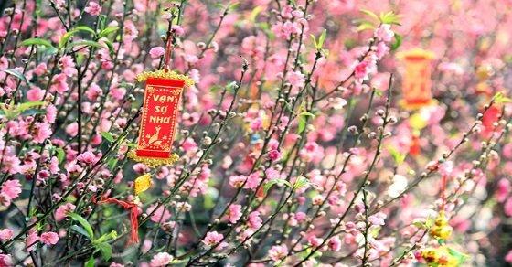 Những bài thuyết minh về hoa đào ngày tết truyền thống quê em