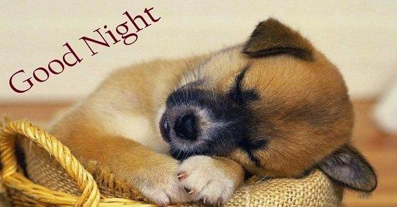 Những lời chúc ngủ ngon bá đạo nhất cho bạn bè