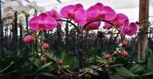 Hướng dẫn cách chăm sóc lan hồ đẹp ra hoa đúng tết