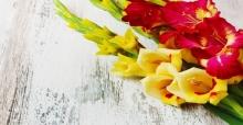 Cách cắm hoa lay ơn nghệ thuật ngày tết đẹp nhất