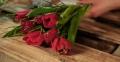 Hướng dẫn cách cắm hoa tulip đẹp tươi lâu