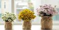 Cách cắm hoa cúc vạn thọ lâu tàn đẹp nhất ngày tết