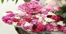 Cách cắm hoa phăng để bàn đẹp, đơn giản và tươi lâu