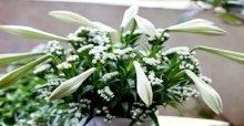 Các cách cắm những mẫu hoa loa kèn nghệ thuật đẹp
