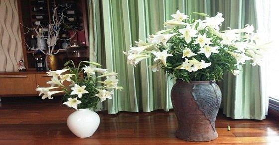 Cách cắm hoa loa kèn đẹp